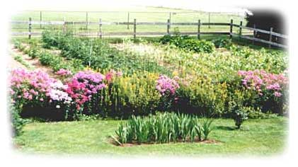 Picture of Arnie and Marge Garinger's beautiful vegetable and flower gardens.